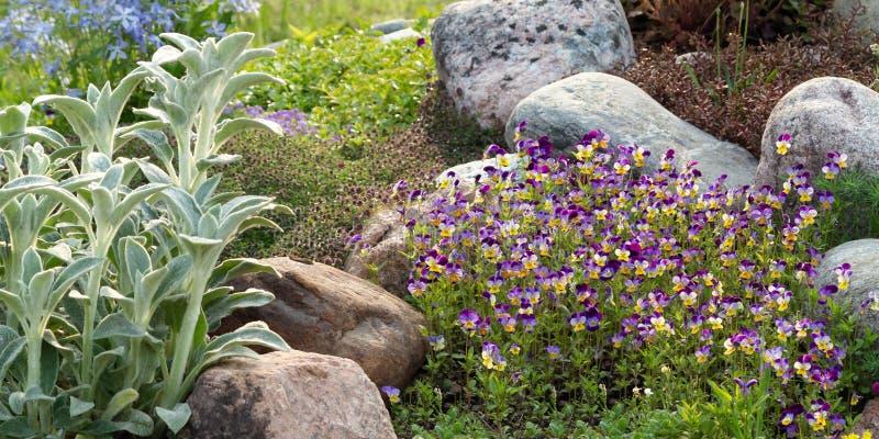 Kwitnący fiołki i inni kwiaty w małym rockery w lecie uprawiają ogródek zdjęcie royalty free