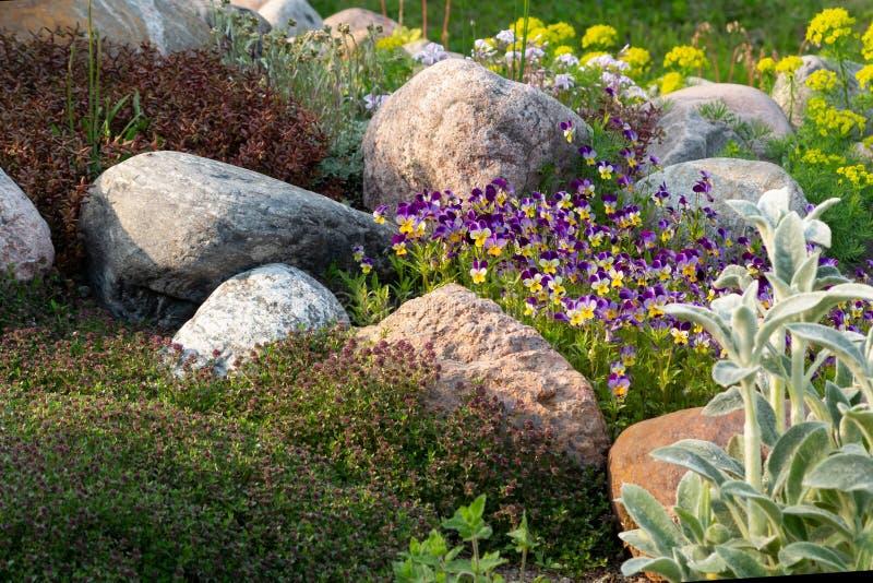 Kwitnący fiołki i inni kwiaty w małym rockery w lecie uprawiają ogródek obraz royalty free