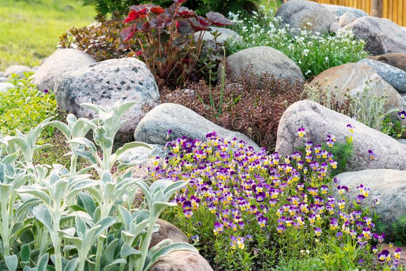 Kwitnący fiołki i inni kwiaty w małym rockery w lecie uprawiają ogródek obrazy stock