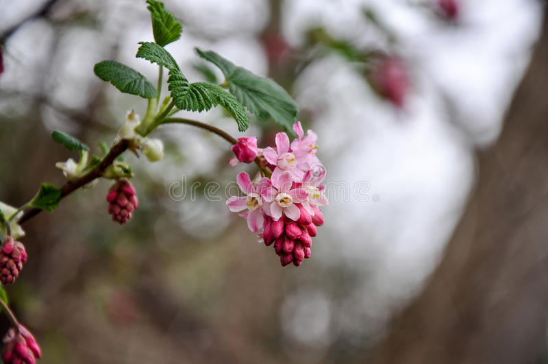 Kwitnący kwiat obraz royalty free