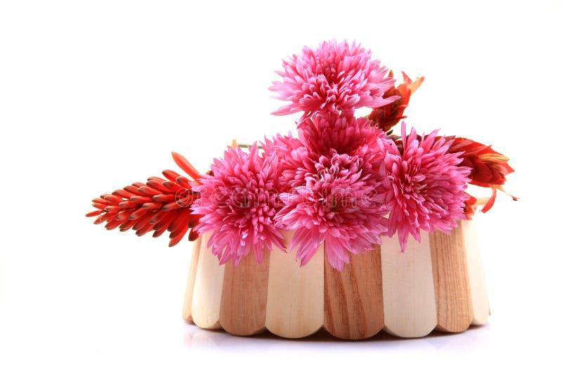 kwitnący kwiaty fotografia stock