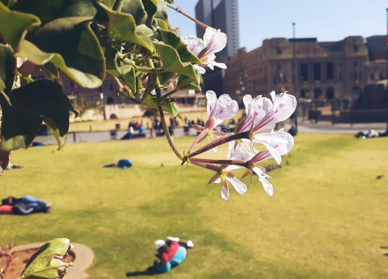 Kwitnący kwiaty w parku zdjęcie royalty free