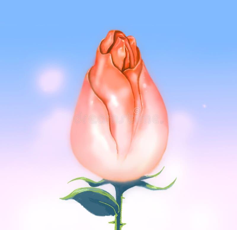Kwitnący menchii róży pączka nieba tło obraz stock