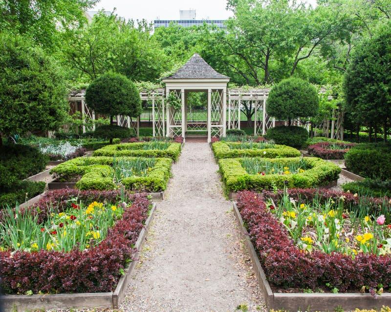Kwitnący Ogrodowy Filadelfia obraz royalty free