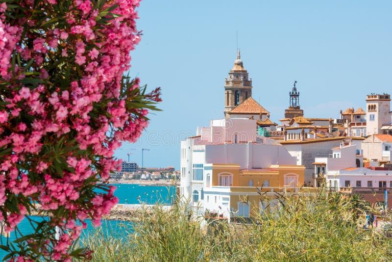 Kwitnący oleander przeciw tłu dziejowy centrum w Sitges, Barcelona, Catalunya, Hiszpania Odbitkowa przestrzeń dla teksta fotografia stock