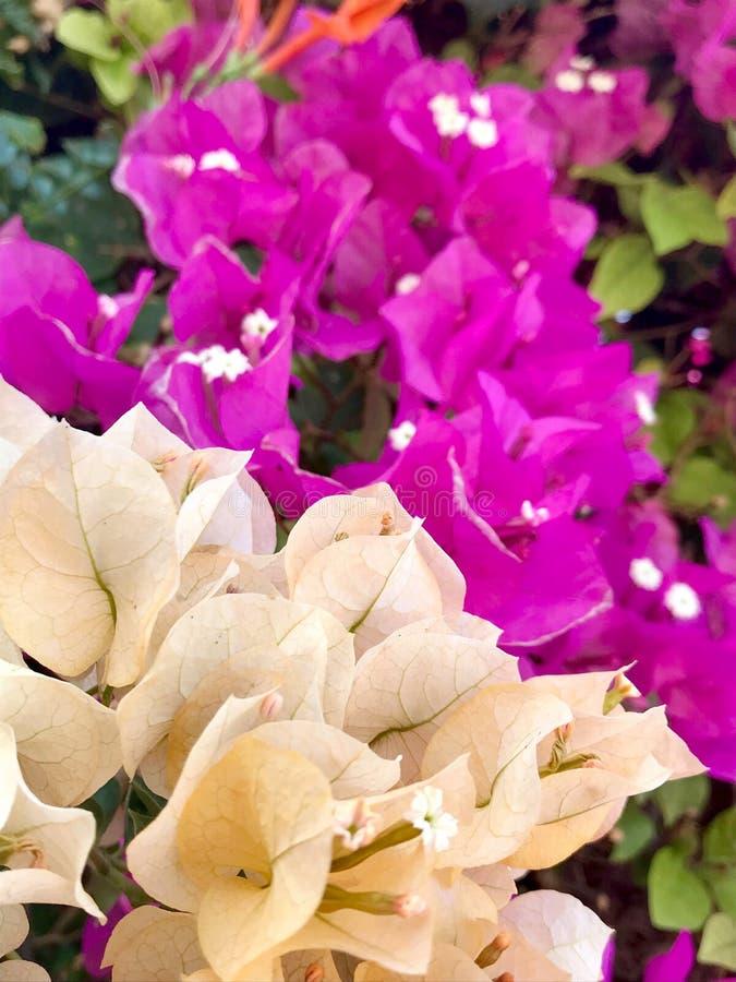 Kwitnący piękny kwiat z zielonymi liśćmi, żyje naturalną naturę zdjęcia stock