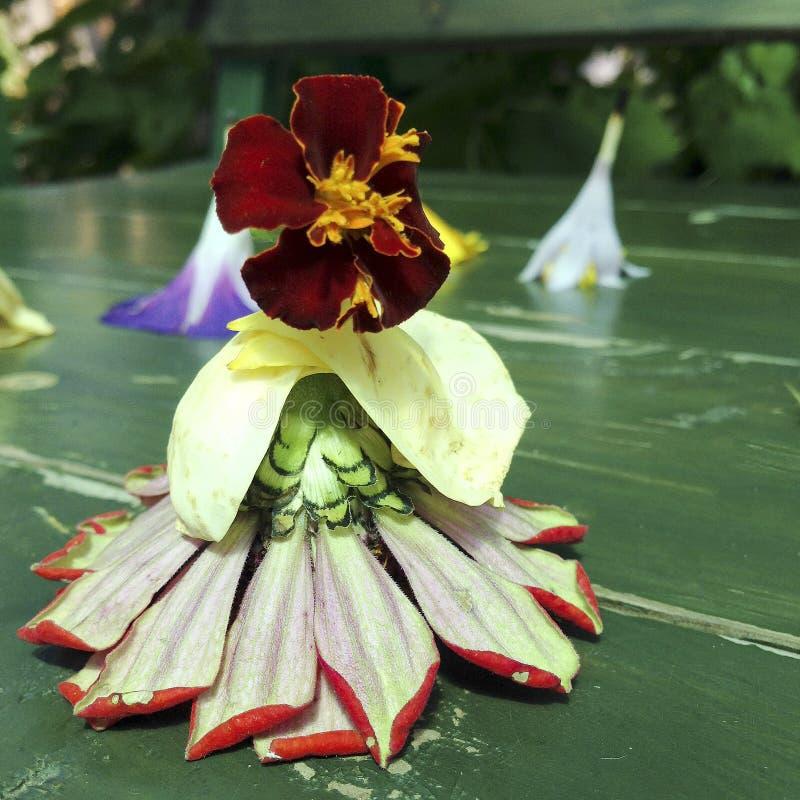 Kwitnący piękny kwiat z zielonymi liśćmi, żyje naturalną naturę fotografia royalty free