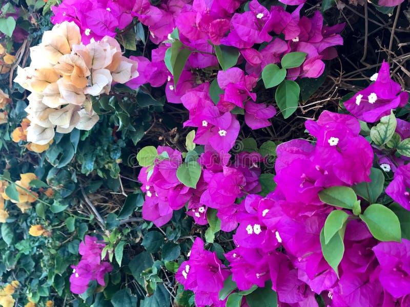 Kwitnący piękny kwiat z zielonymi liśćmi, żyje naturalną naturę obraz royalty free