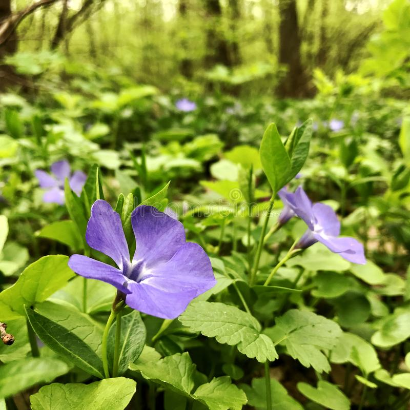 Kwitnący piękny kwiat z zielonymi liśćmi, żyje naturalną naturę obrazy stock