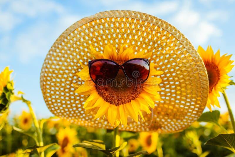 Kwitnący słonecznik w okularach przeciwsłonecznych i słomianego kapeluszu dorośnięcie w lata polu katya lata terytorium krasnodar zdjęcie stock