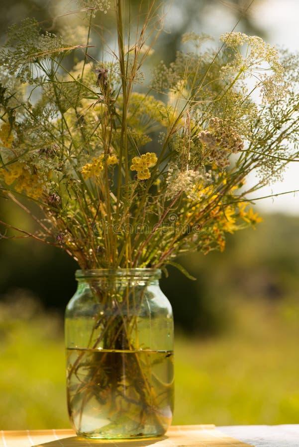Kwitnie łąkę fotografia stock