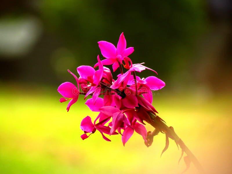 kwitnie ładnego zdjęcia stock