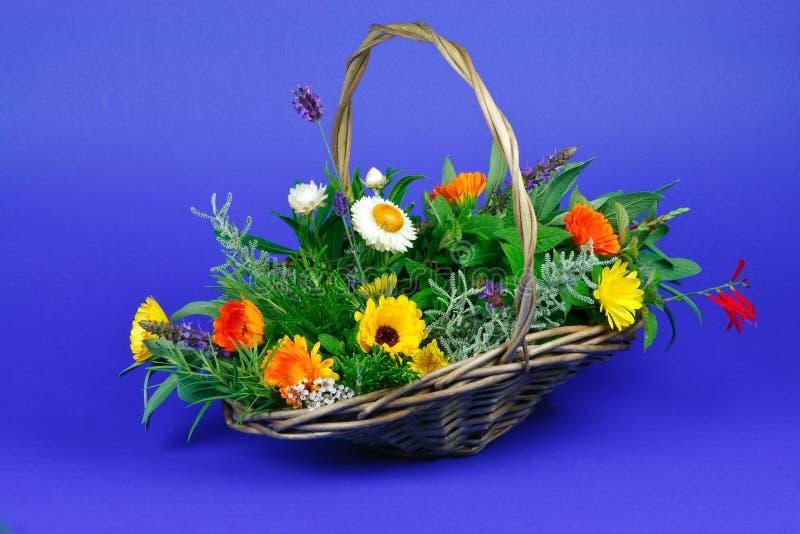 kwitnie świeżych ogrodowych ziele zdjęcie royalty free