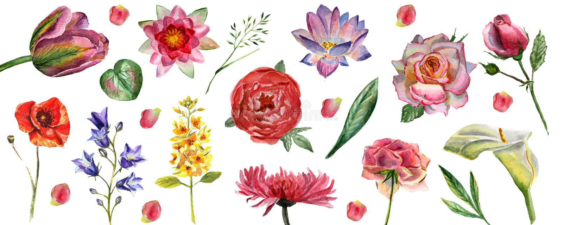 Kwitnie akwareli ilustracj? Set kwiaty odizolowywaj?cy na bia?ym tle royalty ilustracja
