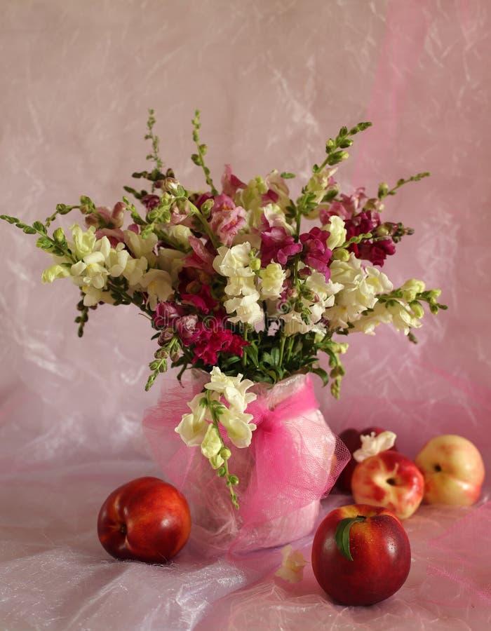 kwitnie brzoskwinie obraz stock