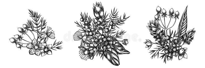 Kwitnie bukiet czarny i biały jałowiec, hypericum, turmeric royalty ilustracja
