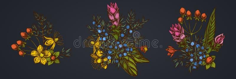 Kwitnie bukiet jałowiec, hypericum, turmeric ilustracji