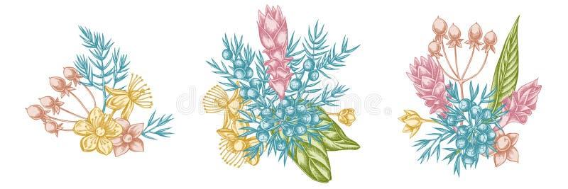 Kwitnie bukiet pastelowy jałowiec, hypericum, turmeric ilustracji