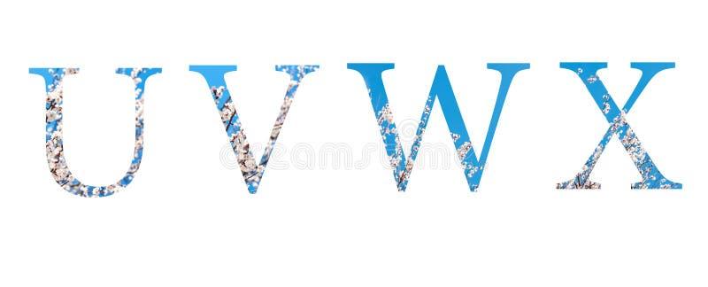Kwitnie chrzcielnicy abecadło u, v, w, x zrobił wiosna kwiaty royalty ilustracja
