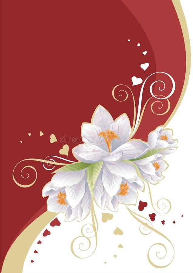 kwitnie czerwonego biel
