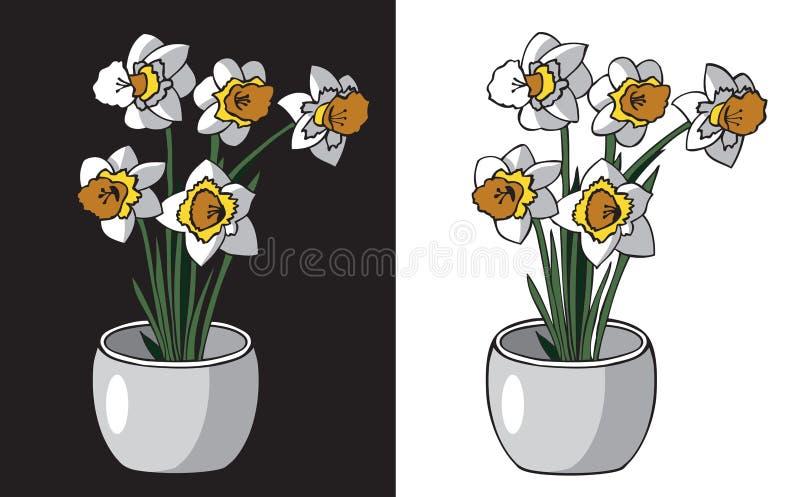 Kwitnie daffodils w garnku ilustracji