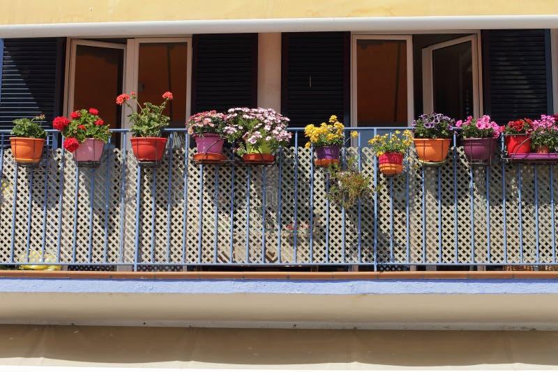 Kwitnie dekorację na błękitnym balkonie, dfferent kwiaty jakby, Sp obraz stock