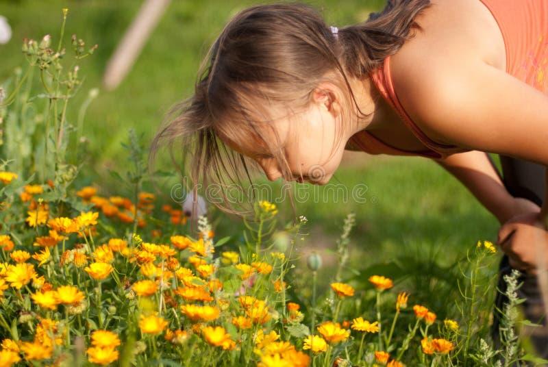 kwitnie dziewczyna odory zdjęcia stock