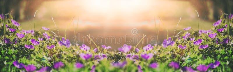 Kwitnie dzwony śródpolny tło niebieska spowodowana pola pełne się chmura dzień zielonych roślin krajobrazu ruchu pokaz mały nie n obrazy stock