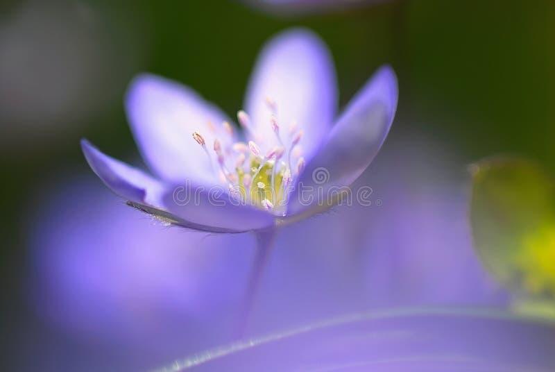 kwitnie inne rośliny zdjęcia royalty free