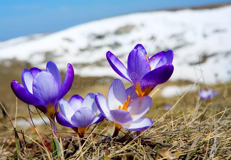 kwitnie inne rośliny zdjęcie stock