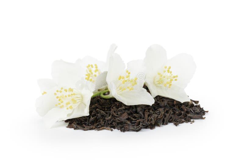 Download Kwitnie ja?minowej herbaty zdjęcie stock. Obraz złożonej z naturalny - 41955410