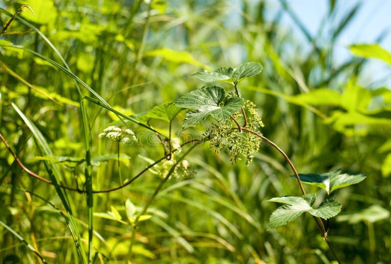 Kwitnie jaskrawego pogodnego letniego dzień. obraz stock