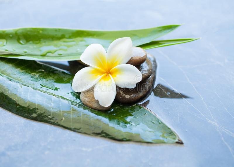 Kwitnie, kamienie i zieleni tropikalni liście dla traktowania na ciemnym tle obraz stock