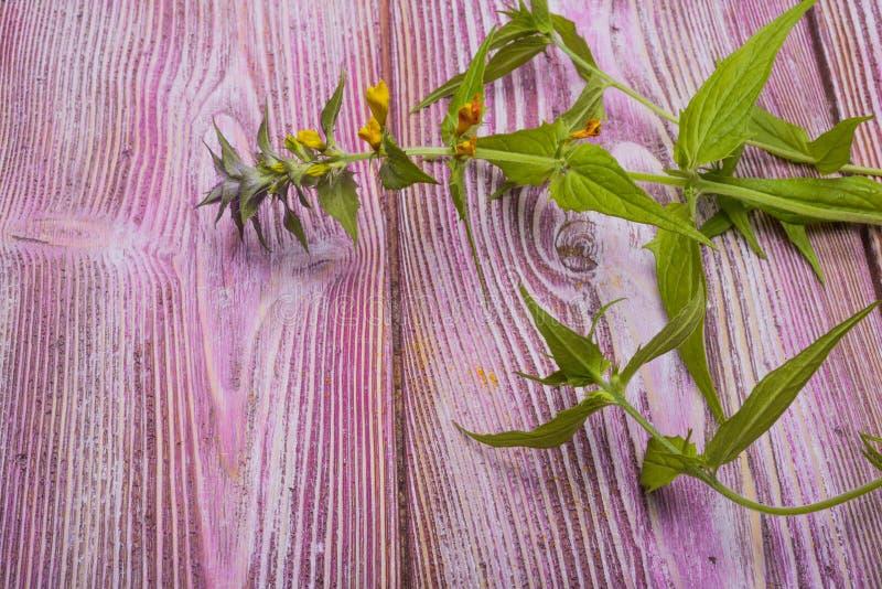 Kwitnie koniczyny zdjęcia stock
