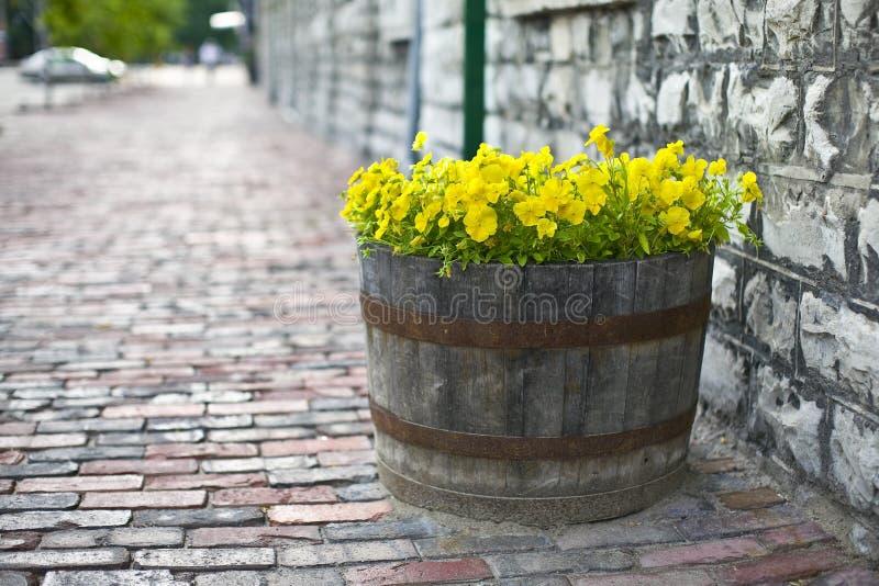 Download Kwitnie lato obraz stock. Obraz złożonej z lato, sezon - 13334267