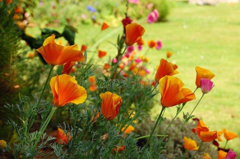 kwitnie lato obrazy stock