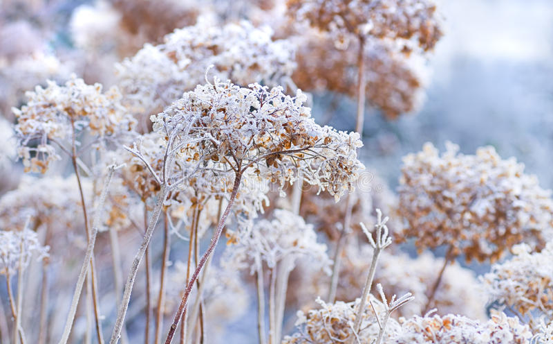 kwitnie lodowatą zima fotografia stock