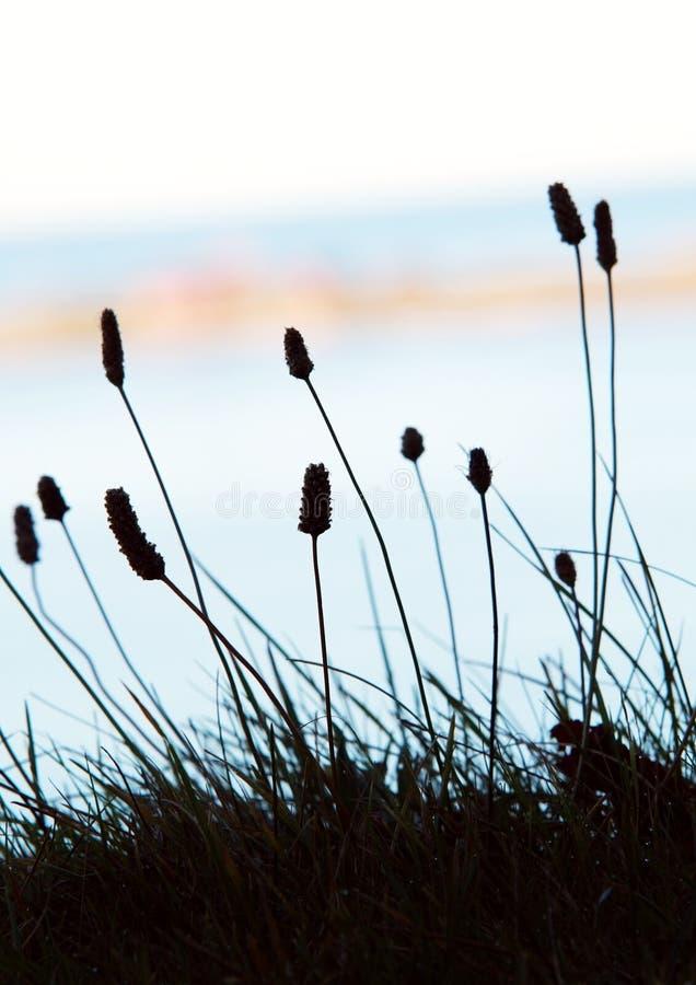 kwitnie morze obrazy royalty free