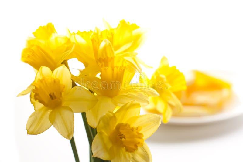 kwitnie narcyza kolor żółty zdjęcia royalty free