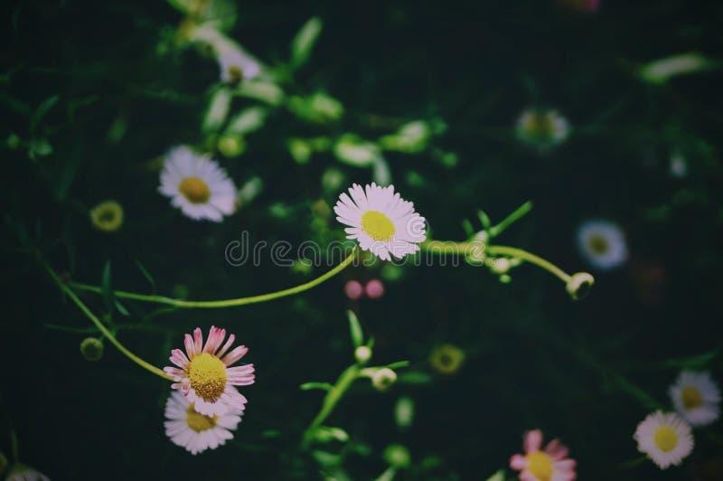 Kwitnie natury vsco zielone światło obrazy stock