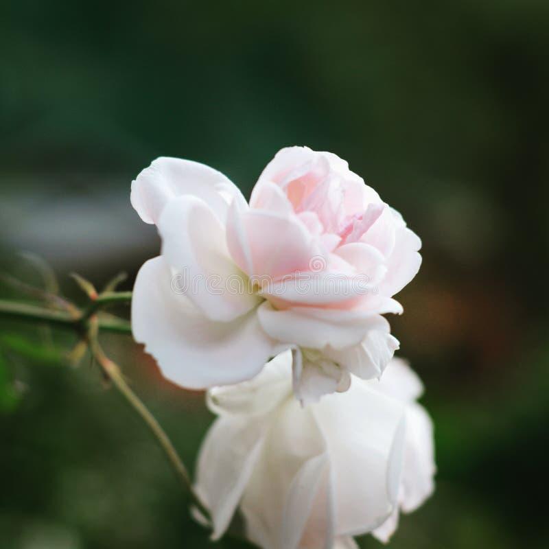 Kwitnie natury vsco zielone światło fotografia royalty free