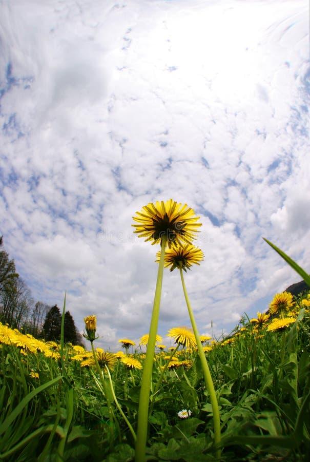 kwitnie niebo obraz stock