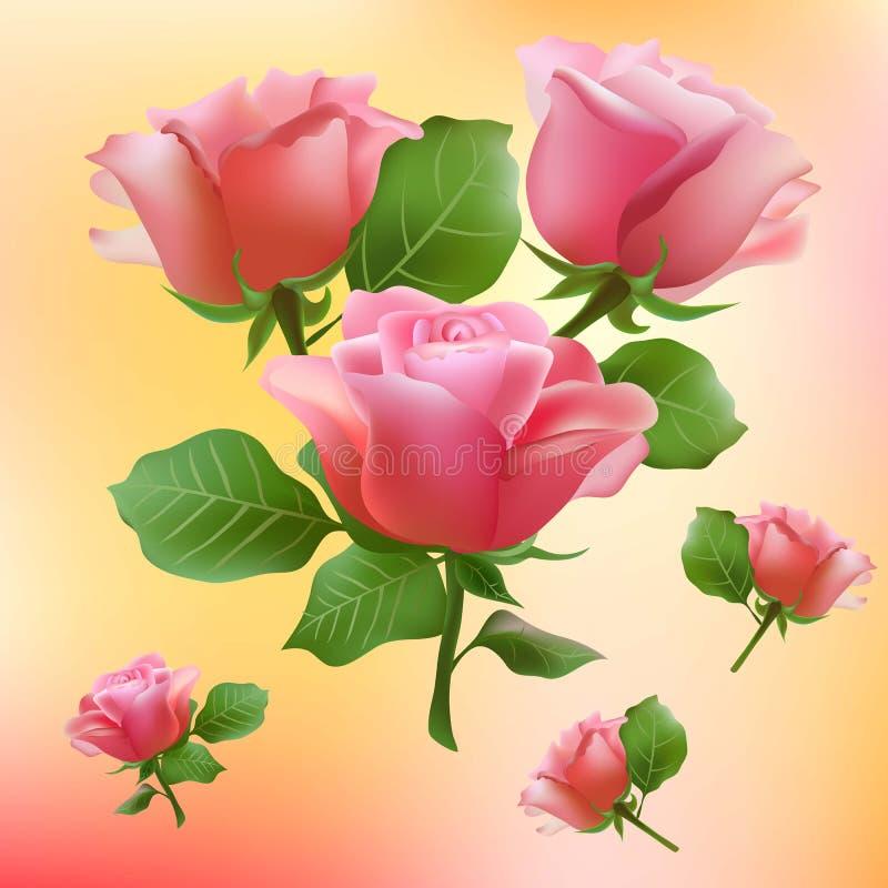 Kwitnie, róża, okwitnięcie, kwiat, kwiecisty, tło, ilustracji