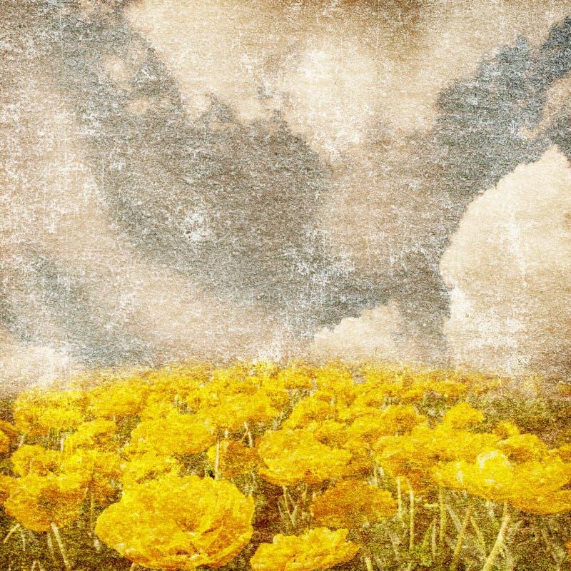 kwitnie rocznika kolor żółty obrazy royalty free