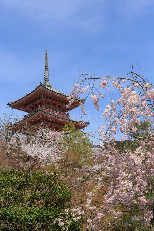 Kwitnie Sakura wiosnę obrazy stock