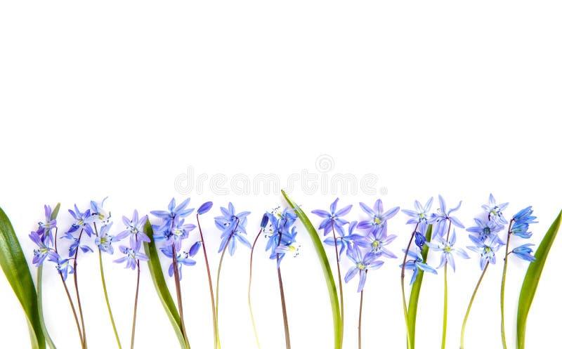 Kwitnie skład Granica robić menchie kwitnie na białym tle Mieszkanie nieatutowy, odgórny widok obrazy stock