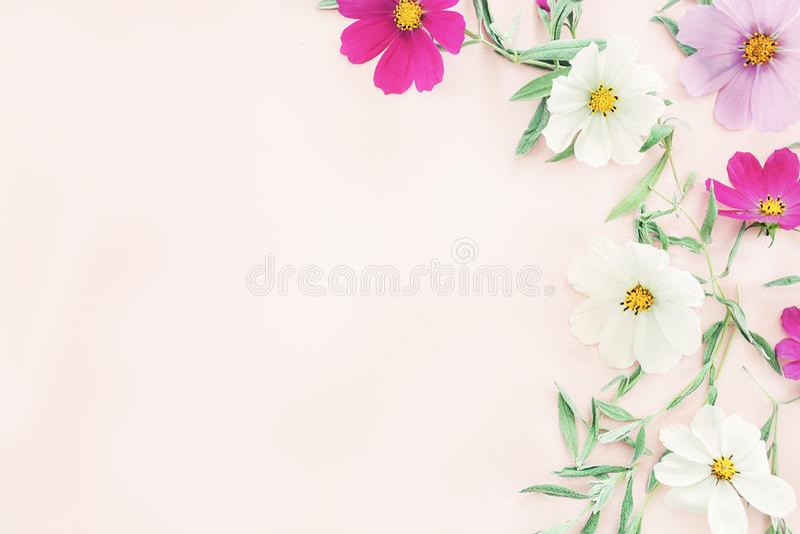 Kwitnie skład kolorowi kwiaty na różowym tle zdjęcia stock