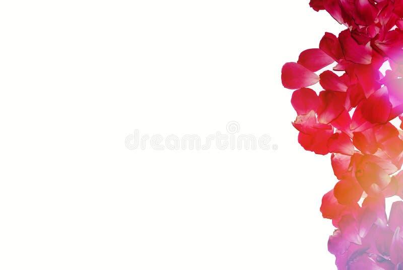 Kwitnie skład Rama robić od Różanych płatków zdjęcia stock