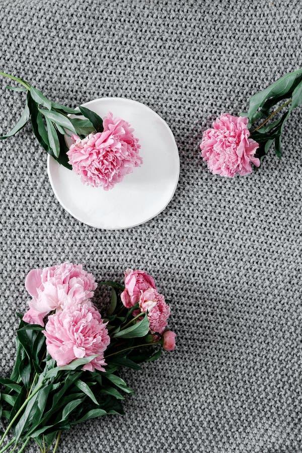 Kwitnie skład Rama robić różowa peonia kwitnie na szarym tle obraz royalty free