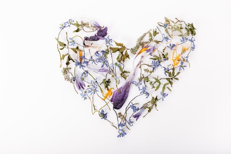 Kwitnie skład Rama robić wysuszeni kwiaty na białym tle Mieszkanie nieatutowy, odgórny widok obraz stock